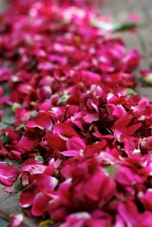 flower petals - Version 2