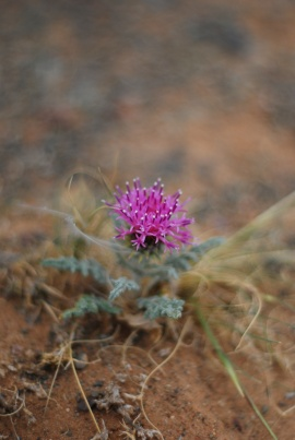 Gobi Flower - Version 2