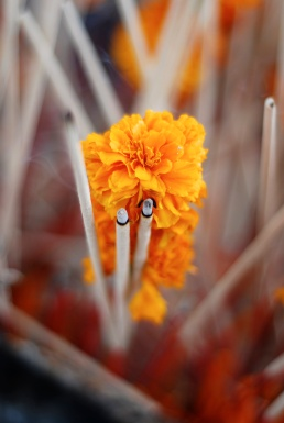 Incense and Marigolds - Version 2