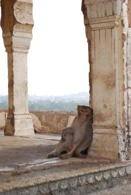 loungin' monkey - Version 2