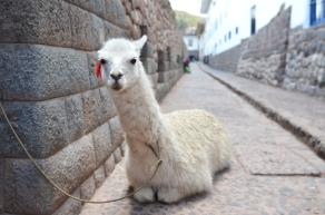 Peru_10_2014_1407