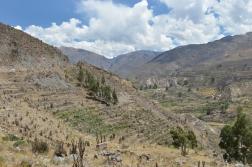 Peru_10_2014_3115