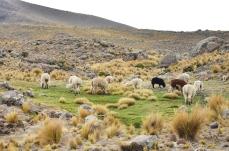 Peru_10_2014_3144