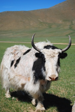 Yak - Version 2