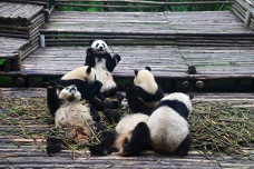 China_2015_000657