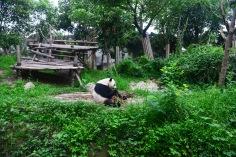 China_2015_000785