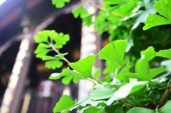 China_2015_001087
