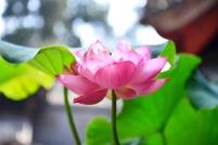 China_2015_003186