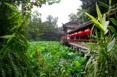 China_2015_004914