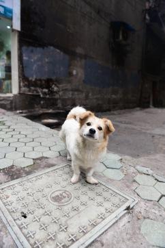 China_2015_008256