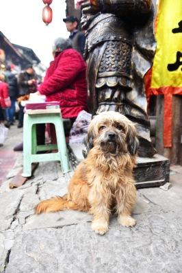 China_2016_016364