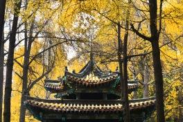 China_2016_034109